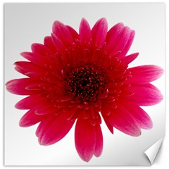 Flower Isolated Transparent Blossom Canvas 20  X 20