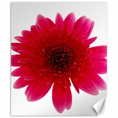 Flower Isolated Transparent Blossom Canvas 20  X 24