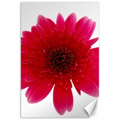 Flower Isolated Transparent Blossom Canvas 20  X 30