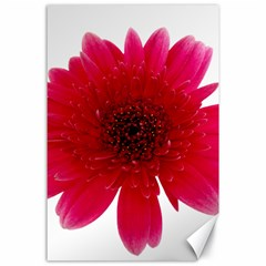 Flower Isolated Transparent Blossom Canvas 24  X 36