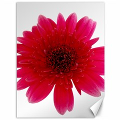 Flower Isolated Transparent Blossom Canvas 36  x 48