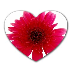 Flower Isolated Transparent Blossom Heart Mousepads