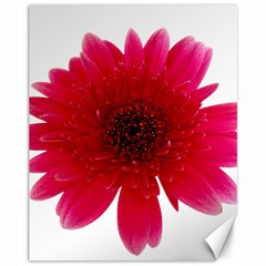 Flower Isolated Transparent Blossom Canvas 11  X 14