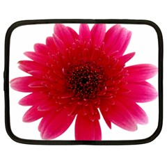 Flower Isolated Transparent Blossom Netbook Case (xxl)