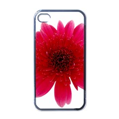 Flower Isolated Transparent Blossom Apple Iphone 4 Case (black)
