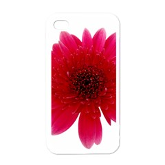 Flower Isolated Transparent Blossom Apple iPhone 4 Case (White)