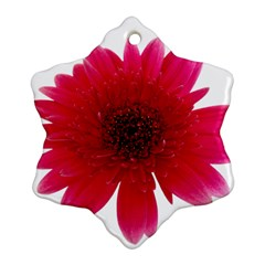 Flower Isolated Transparent Blossom Ornament (Snowflake)