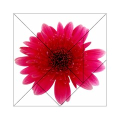 Flower Isolated Transparent Blossom Acrylic Tangram Puzzle (6  x 6 )