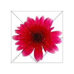Flower Isolated Transparent Blossom Acrylic Tangram Puzzle (4  X 4 )