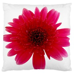 Flower Isolated Transparent Blossom Large Cushion Case (one Side)