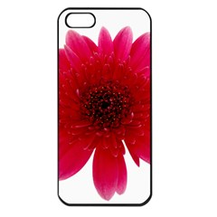 Flower Isolated Transparent Blossom Apple Iphone 5 Seamless Case (black)