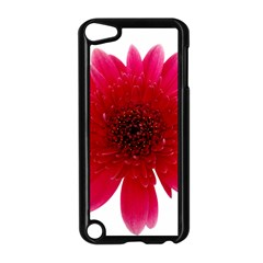 Flower Isolated Transparent Blossom Apple Ipod Touch 5 Case (black)