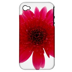 Flower Isolated Transparent Blossom Apple iPhone 4/4S Hardshell Case (PC+Silicone)