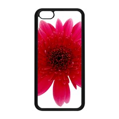 Flower Isolated Transparent Blossom Apple iPhone 5C Seamless Case (Black)