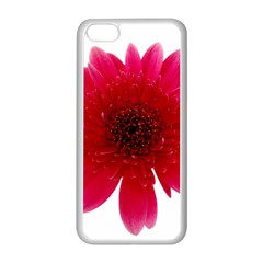 Flower Isolated Transparent Blossom Apple Iphone 5c Seamless Case (white)