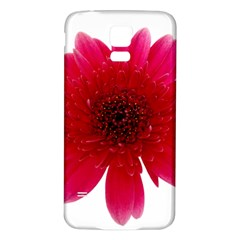 Flower Isolated Transparent Blossom Samsung Galaxy S5 Back Case (White)