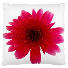 Flower Isolated Transparent Blossom Large Flano Cushion Case (two Sides)