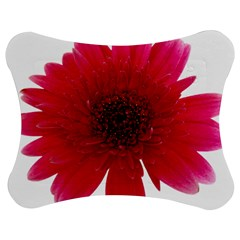 Flower Isolated Transparent Blossom Jigsaw Puzzle Photo Stand (Bow)