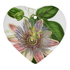 Passion Flower Flower Plant Blossom Ornament (heart)