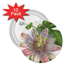 Passion Flower Flower Plant Blossom 2 25  Buttons (10 Pack)