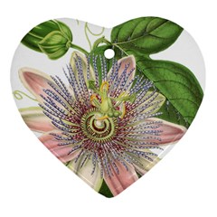 Passion Flower Flower Plant Blossom Heart Ornament (two Sides)