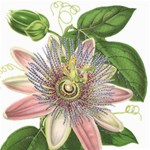 Passion Flower Flower Plant Blossom Storage Stool 12   Front