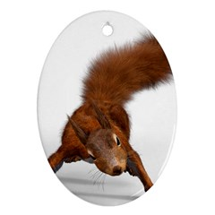 Squirrel Wild Animal Animal World Ornament (oval)