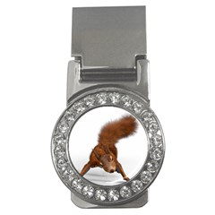Squirrel Wild Animal Animal World Money Clips (cz)