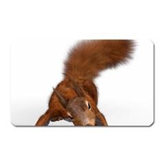 Squirrel Wild Animal Animal World Magnet (rectangular)