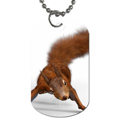 Squirrel Wild Animal Animal World Dog Tag (Two Sides)