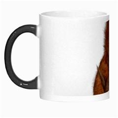 Squirrel Wild Animal Animal World Morph Mugs