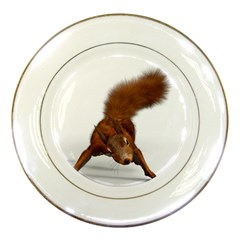Squirrel Wild Animal Animal World Porcelain Plates