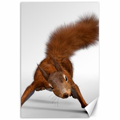 Squirrel Wild Animal Animal World Canvas 20  X 30