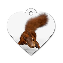 Squirrel Wild Animal Animal World Dog Tag Heart (two Sides)