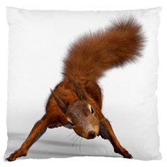 Squirrel Wild Animal Animal World Large Cushion Case (two Sides)