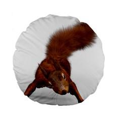 Squirrel Wild Animal Animal World Standard 15  Premium Round Cushions