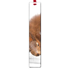 Squirrel Wild Animal Animal World Large Book Marks