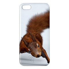 Squirrel Wild Animal Animal World Iphone 5s/ Se Premium Hardshell Case