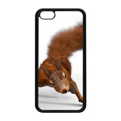 Squirrel Wild Animal Animal World Apple Iphone 5c Seamless Case (black)