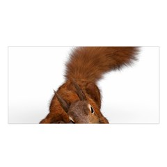 Squirrel Wild Animal Animal World Satin Shawl