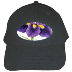 Lily Flower Plant Blossom Bloom Black Cap