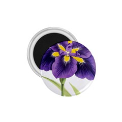 Lily Flower Plant Blossom Bloom 1 75  Magnets