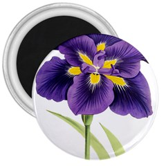 Lily Flower Plant Blossom Bloom 3  Magnets