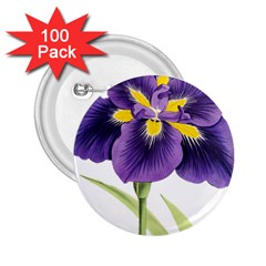 Lily Flower Plant Blossom Bloom 2 25  Buttons (100 Pack)