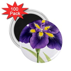 Lily Flower Plant Blossom Bloom 2 25  Magnets (100 Pack)