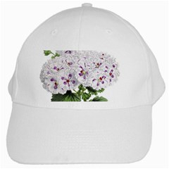 Flower Plant Blossom Bloom Vintage White Cap