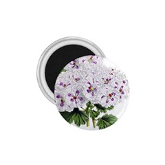Flower Plant Blossom Bloom Vintage 1.75  Magnets
