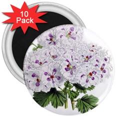 Flower Plant Blossom Bloom Vintage 3  Magnets (10 Pack)