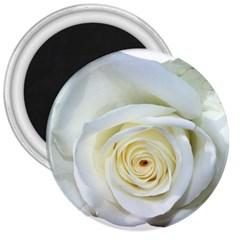 Flower White Rose Lying 3  Magnets