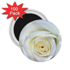 Flower White Rose Lying 2 25  Magnets (100 Pack)